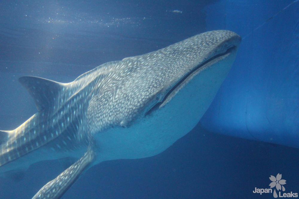 Foto eines Waalhais.