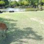 Hirsch am Teich