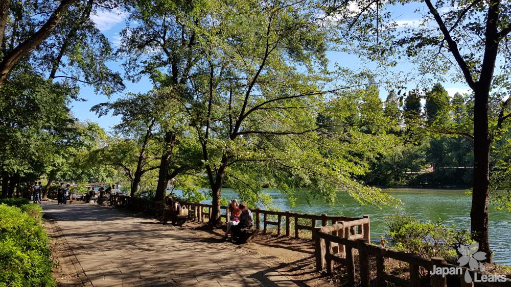 Ein Weg im großen Inokashira Park.