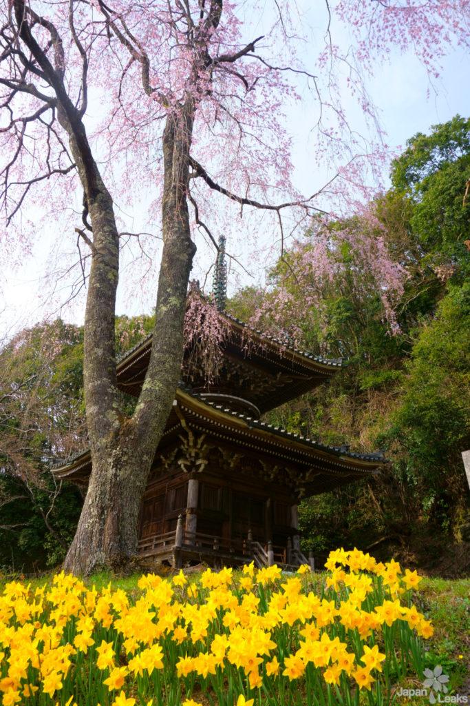 Pagode am Nyoirin Tempel mit Kirschblüte und Blumen.