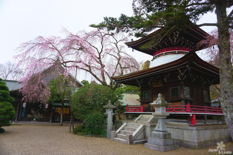 Der Tonan-in Tempel liegt mitten in der Siedlung in Yoshinoyama.