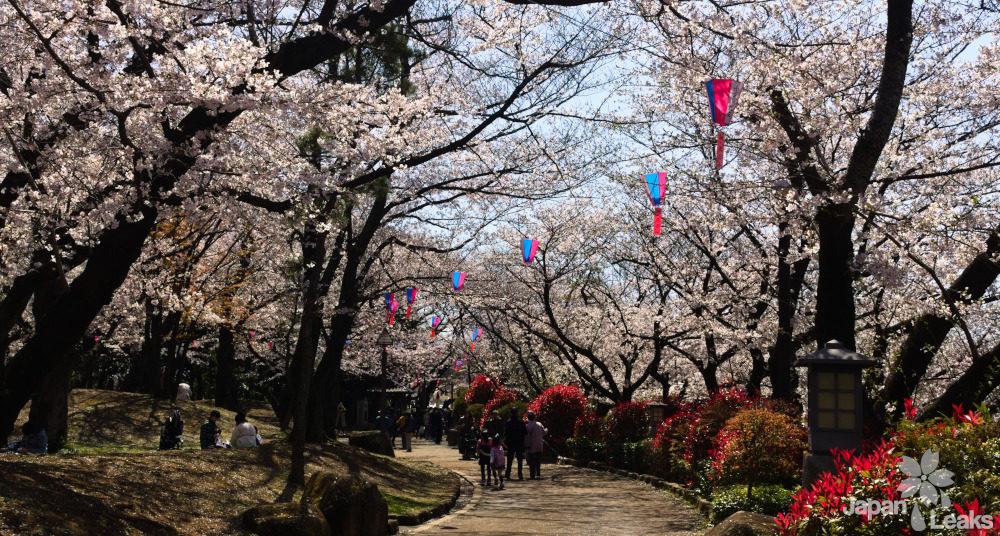 Kirschbäume und Wege im Asukayama Park.