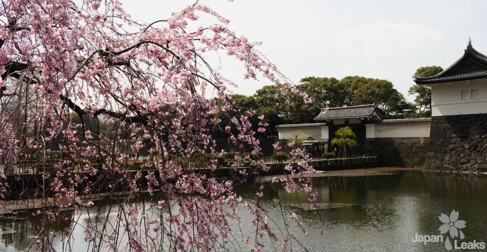 Foto eines Eingangstores zum Kaiserpalast mit Kirschblüten.