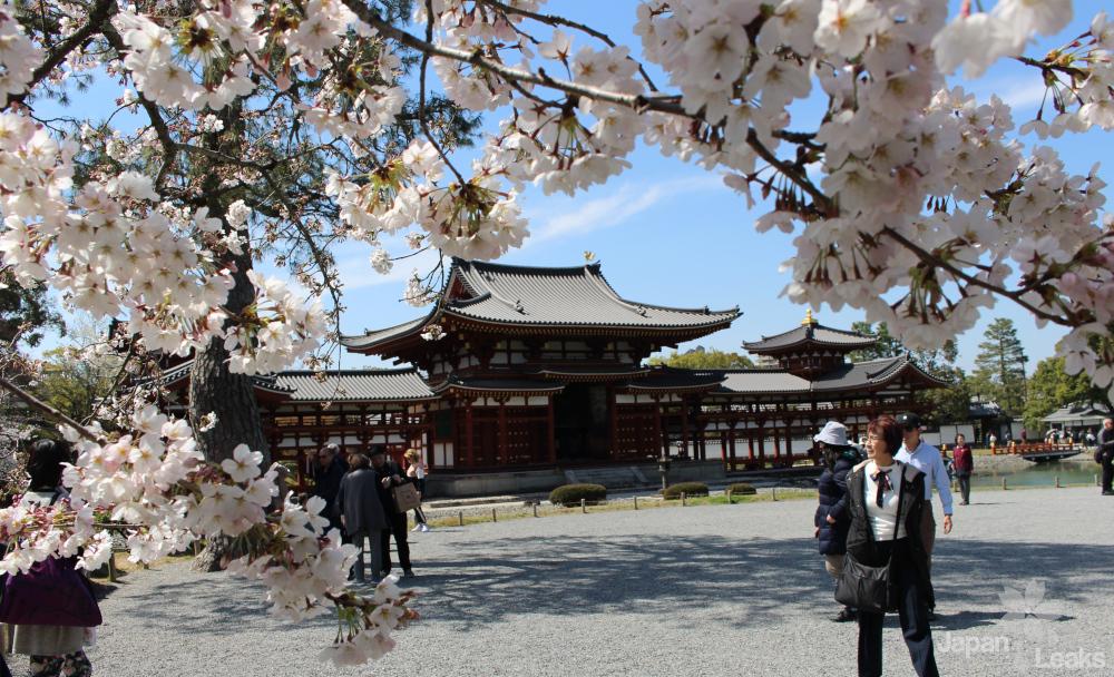 Foto des Byodoin mit einem Ast Kirschblüten.