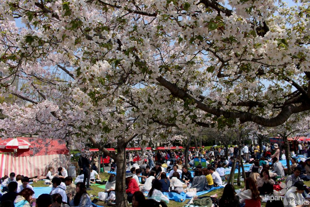 Foto der Picknicker im Park.