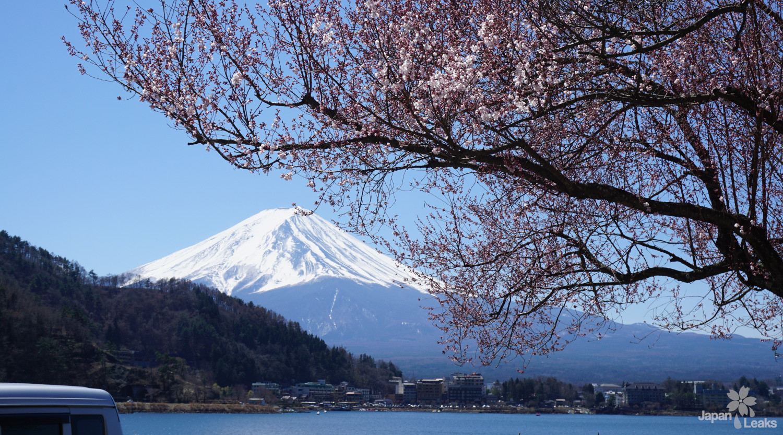 Foto des Fuji mit einzelnen Kirschblüten.